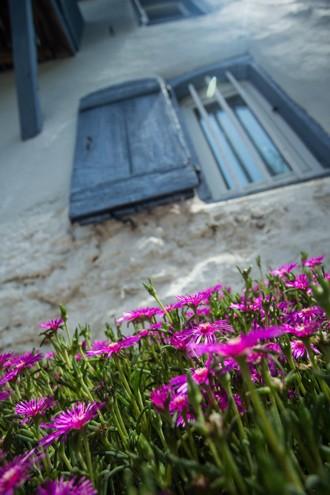 fleurs fenetre